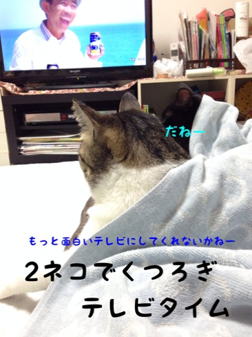 fc2blog_20140911171702dbb.jpg