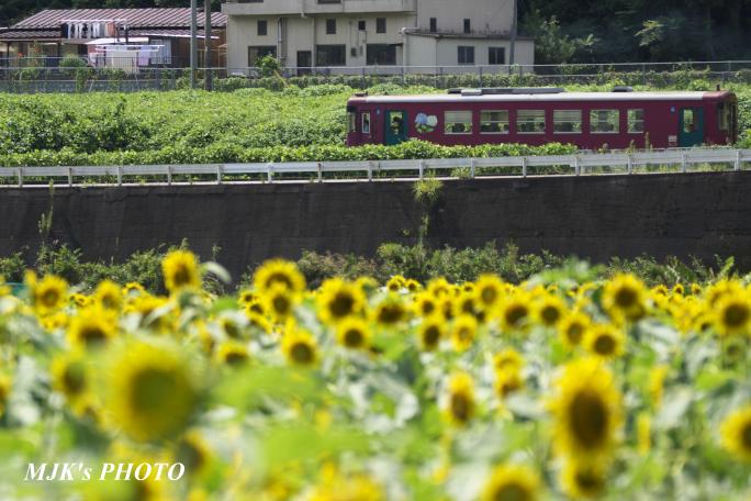 suhara4412.jpg