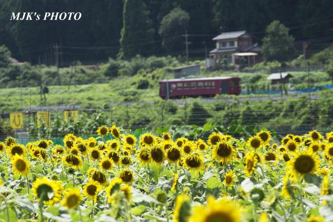 suhara4414.jpg