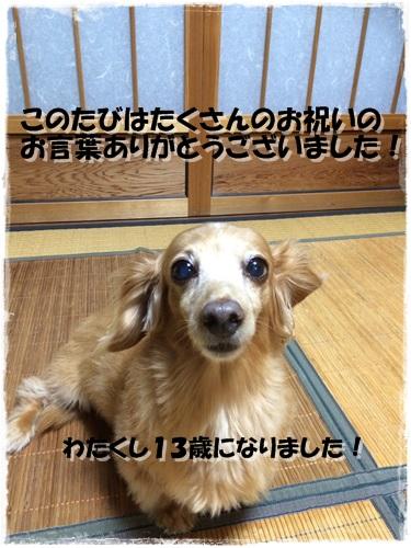 IMG_4197.jpg