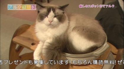 下北沢猫カフェ (7)