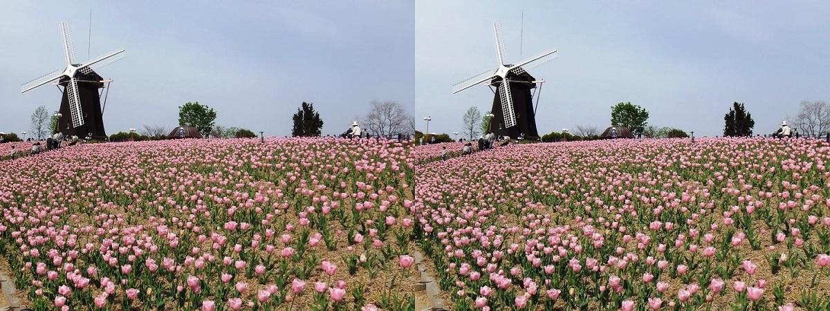 鶴見緑地公園の花②(平行法)