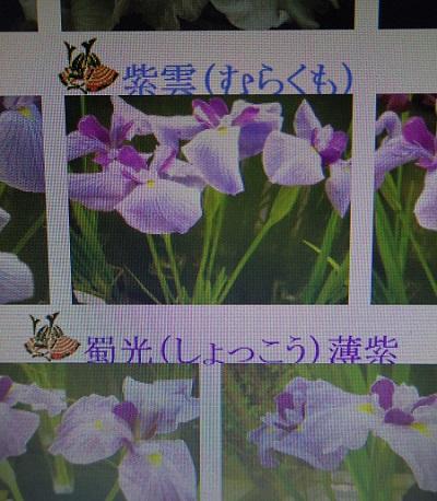 2014050513423795c.jpg