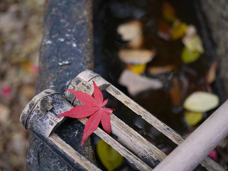 HAW675_mizukumibanokouyouichimai500.jpg