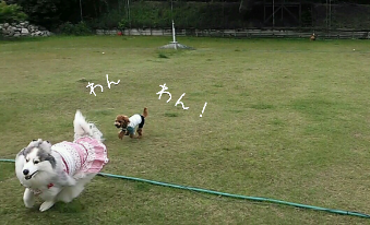 fc2_2014-06-23_23-03-39-461.png