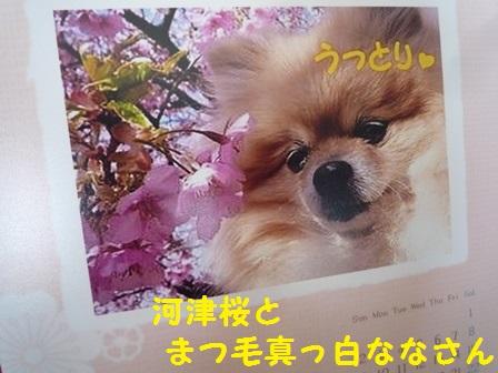 201403031049359df.jpg