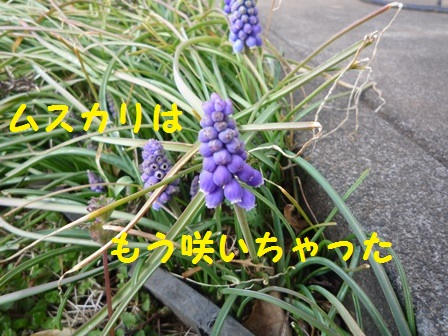 20140315105140c7f.jpg