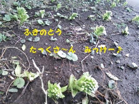 201403241223416d6.jpg