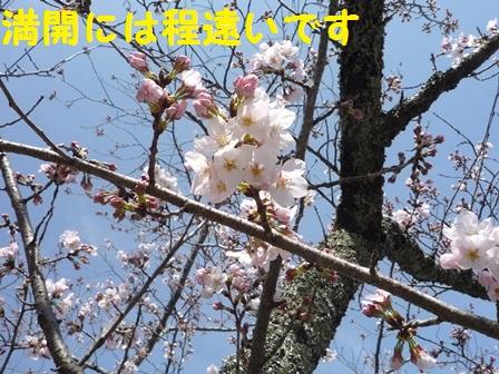 201403311439394aa.jpg