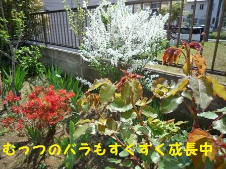 201405071120409c8.jpg