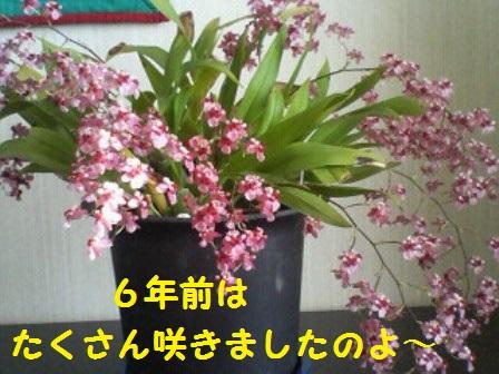 20140507112044fc5.jpg