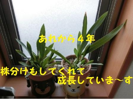 20140507112114dee.jpg