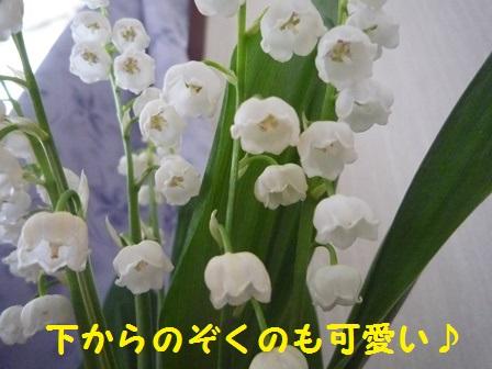20140507112117d78.jpg