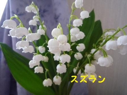 20140507112119843.jpg