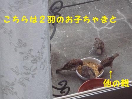 20140520112752753.jpg