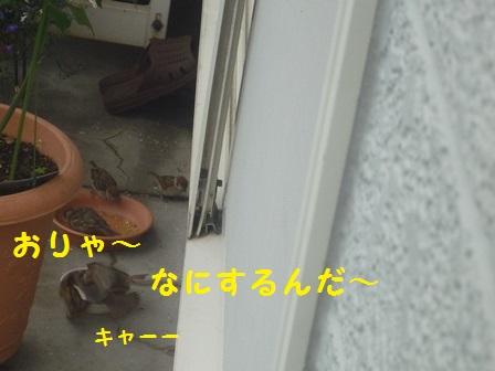 20140718124250bf4.jpg