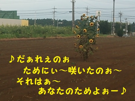 20140828160020075.jpg