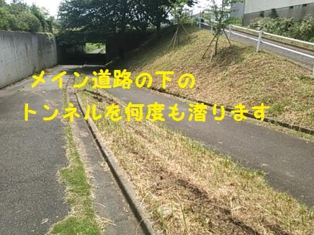2014082816005060c.jpg