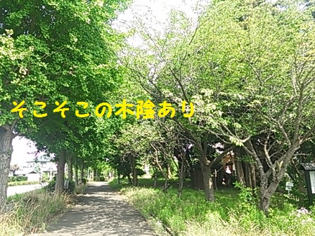 20140828160051a46.jpg