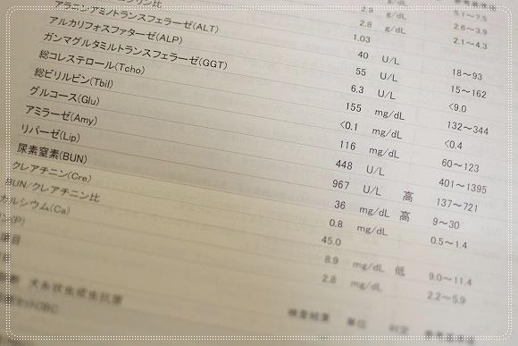 DSC_0004 (14)