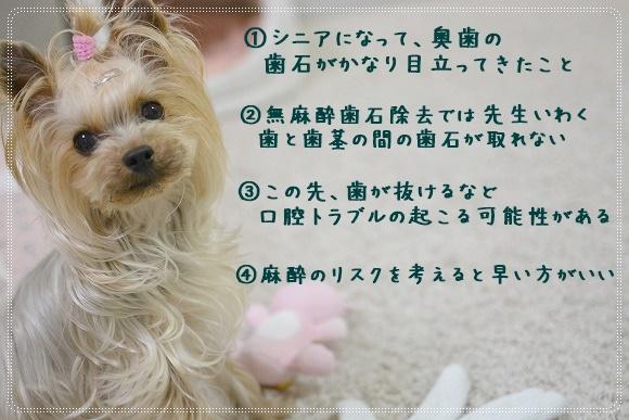 DSC_0024 (8)