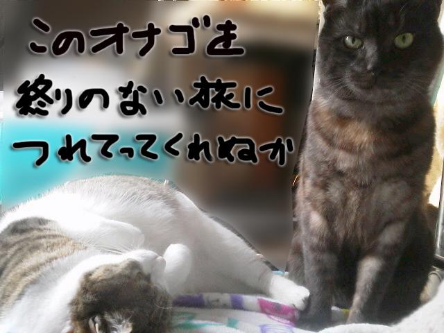20140329133346ecc.jpg