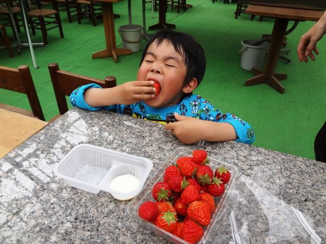 イチゴを食べるりくちゃん