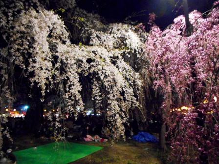 my-garden 079 (2)