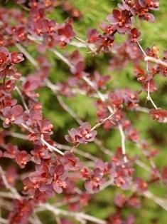 my-garden 174