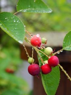 my-garden 016 (4)