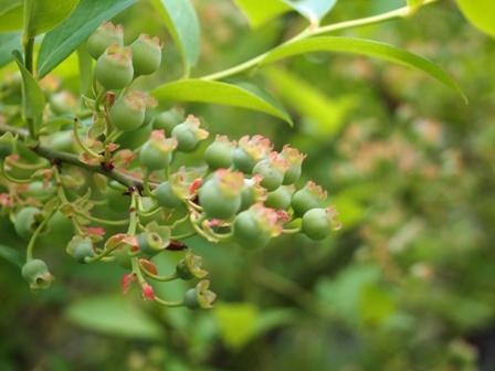 my-garden 134