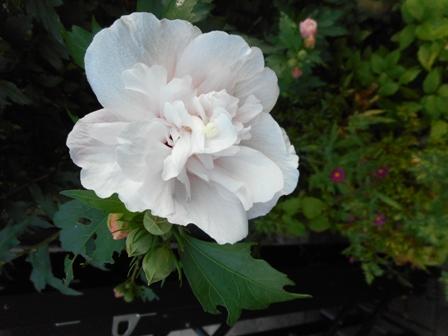 my-garden 066