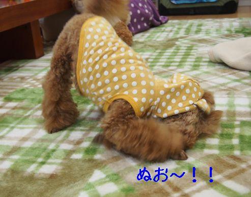 2014032706485532d.jpg
