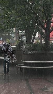 豪雨のハチ公