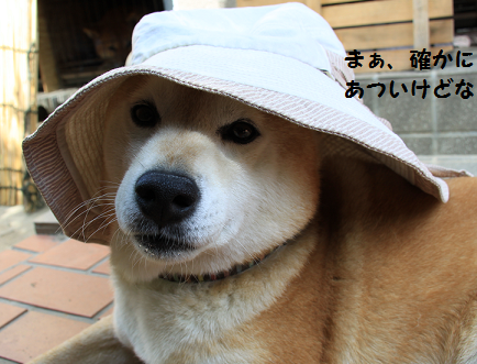 2014060523455053a.png