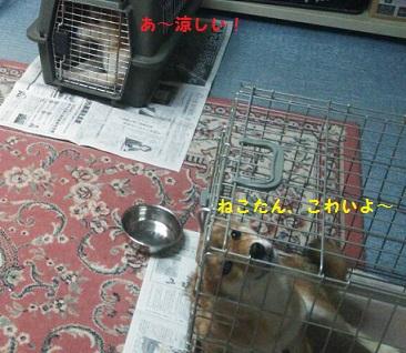 20140729001543c93.jpg