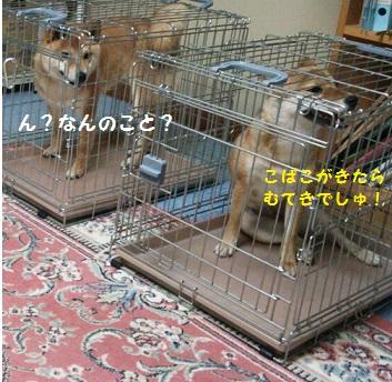 201407290015466ab.jpg