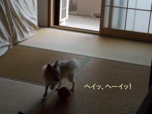 20140911_9.jpg