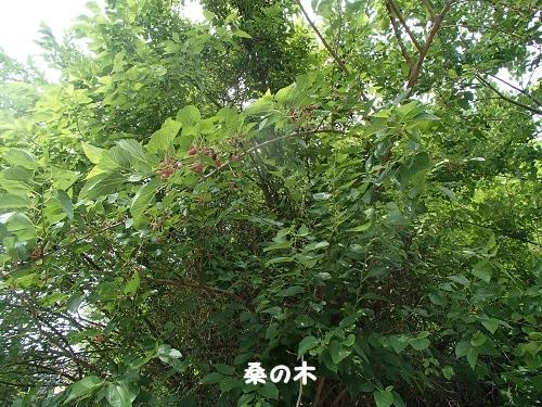 201406242100577f1.jpg