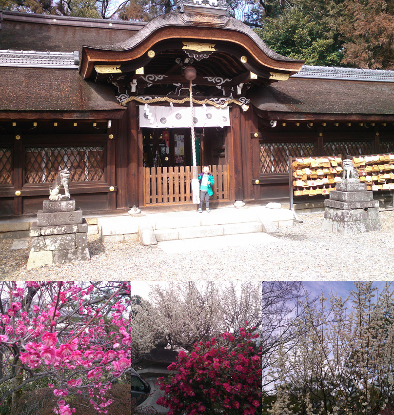 20140302-umenomiya-shrine.jpg