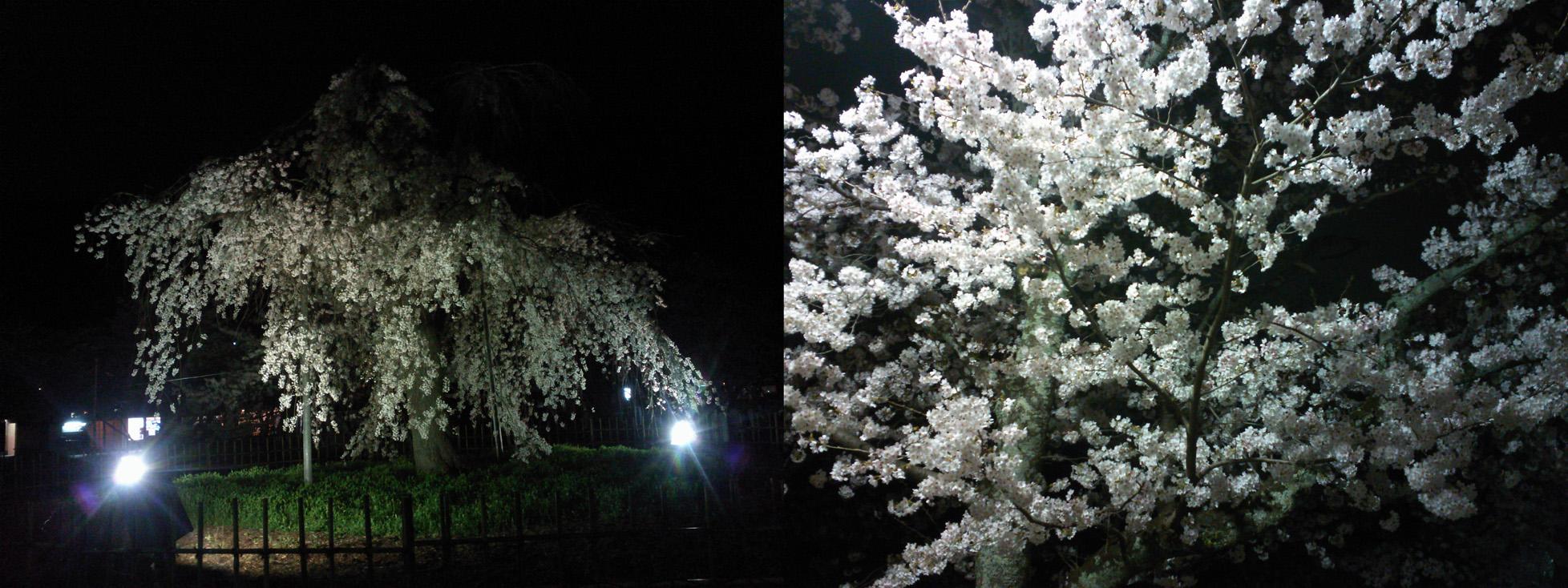 20140403arashiyama.jpg