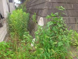 擁壁の隙間の草刈り_01