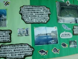 海中公園イワシ2